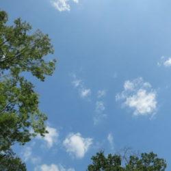夏の空と木々