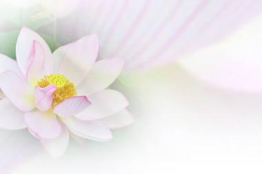 蓮の花のぼかし写真