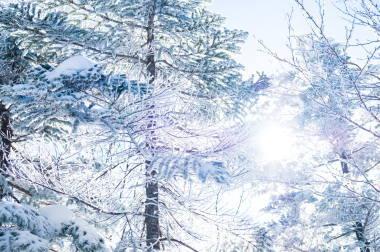雪のかかる木々