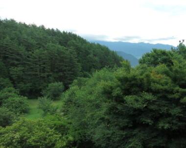 宿周辺の森