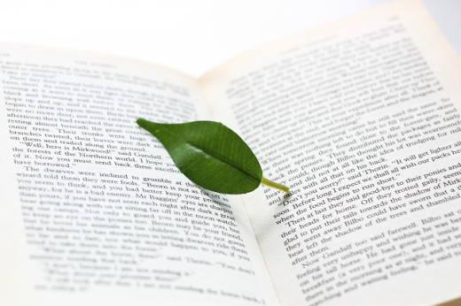 洋書頁と葉