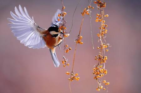 実をついばむ小鳥写真