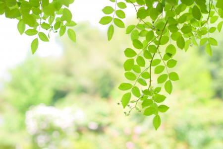 柔らかな光と新緑の画像